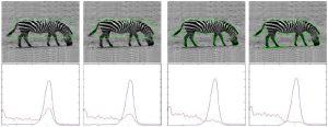 شبیه سازی مقاله خوشه بندی تصویر به کمک معیار توزیع کانتورهای فعال با متلب