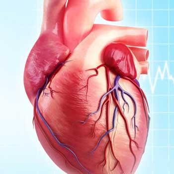 تشخیص بیماری قلبی با استفاده از طبقه بندی کننده های مختلف در متلب